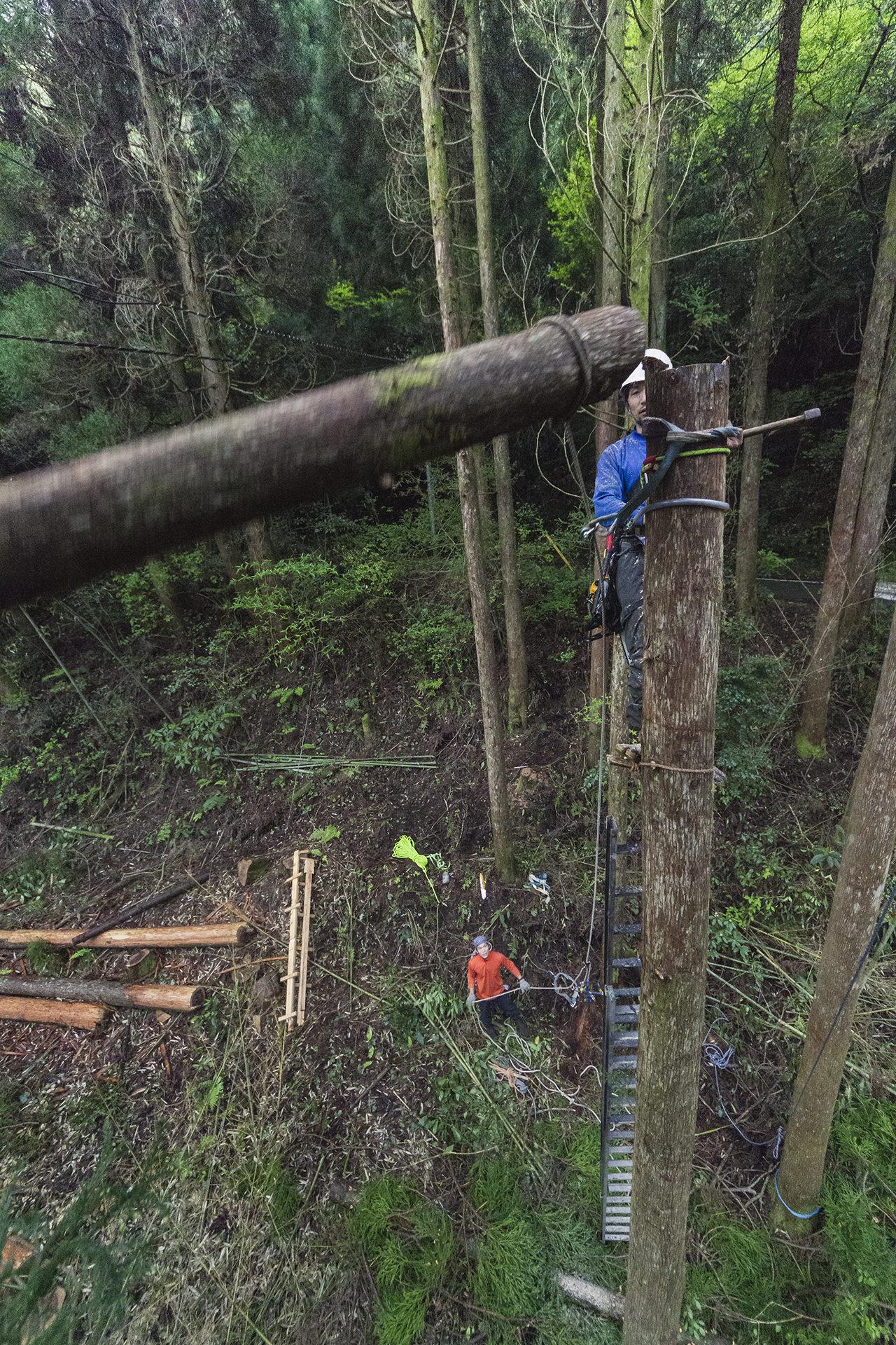 高橋素晴の樹上間伐チーム