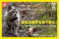 アキママコラボ、ネコカメラ